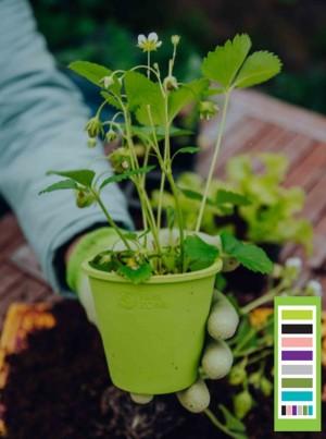 FAIR ZONE Pflanzentopf aus Naturkautschuk 6er - Farb Mix